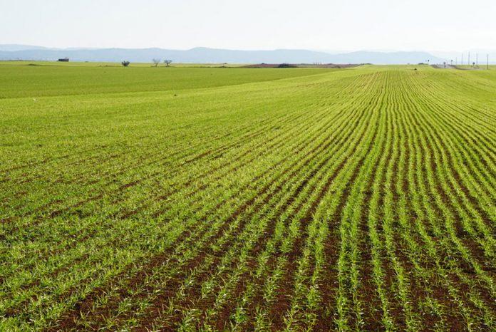 Uso de microorganismos en la agricultura