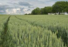 Importancia de los microorganismos para el suelo