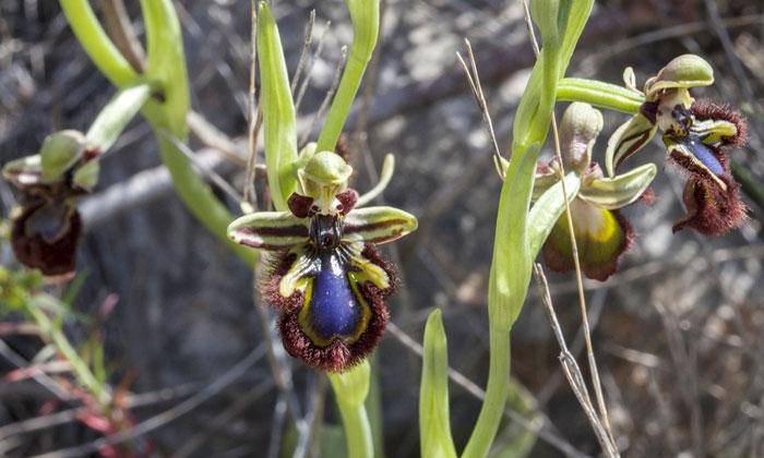 Exposición internacional de orquídeas
