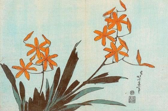 orquideas-naranjas