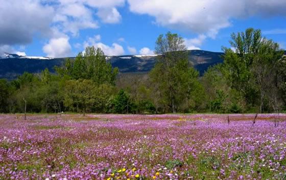 Parque Natural de Peñalara en primavera