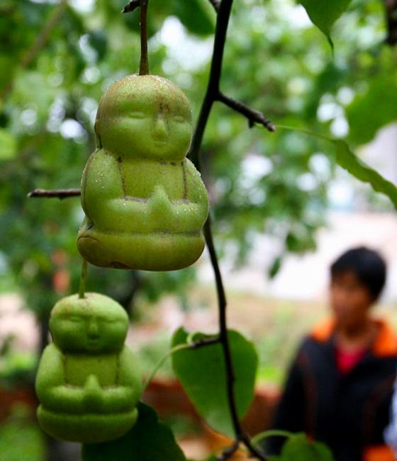 Peras con forma de Buda