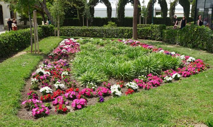 Petunias en el jardín