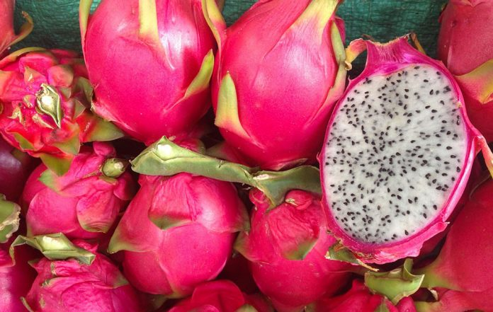 pitahaya, fruta del dragón