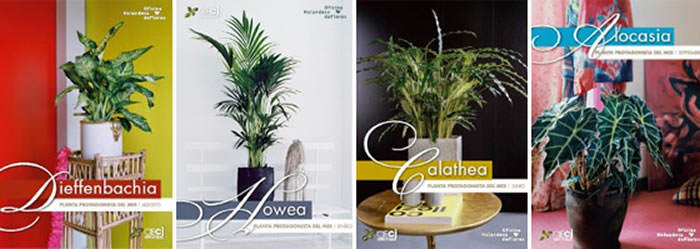 planta protagonista del mes