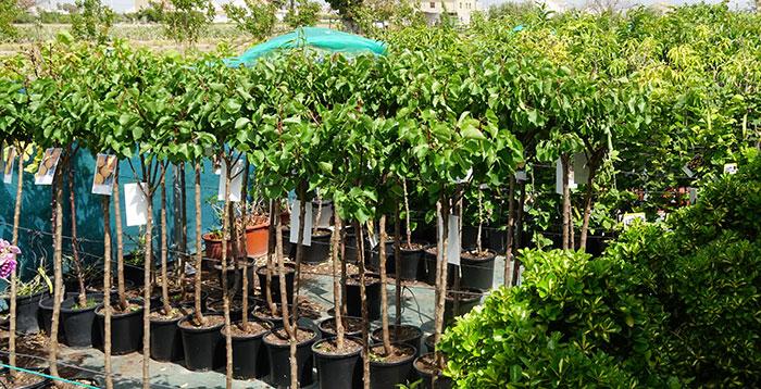 Cómo plantar árboles frutales