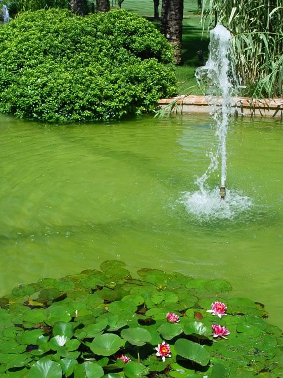 Jimenezrodriguezlucia t4 las plantas y los hongos for Plantas estanque