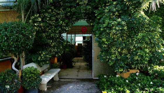 Plantas en el centro de jardinería