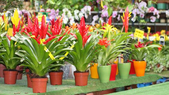 Plantas de coleccionista