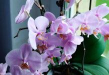 Plantas de interior con flores