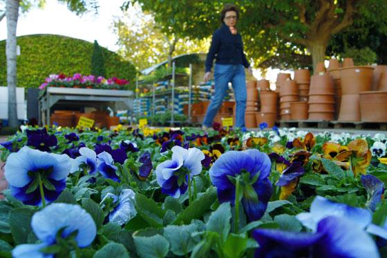 Plantas de temporada en el Garden