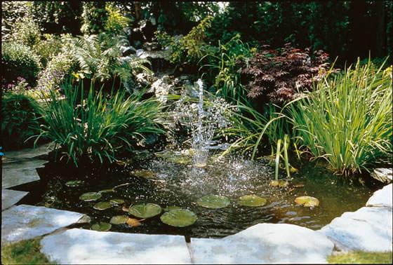 Plantas para estanques revista de flores plantas for Plantas para estanque peces koi