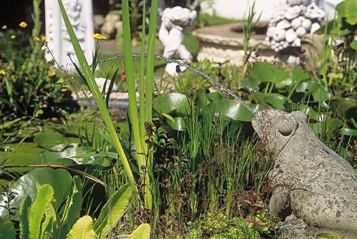 plantas en el estanque