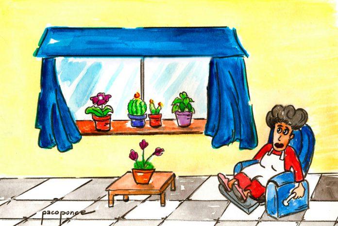 Plantas interior 1