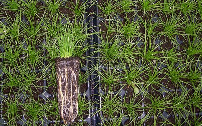 Plantas macrófitas