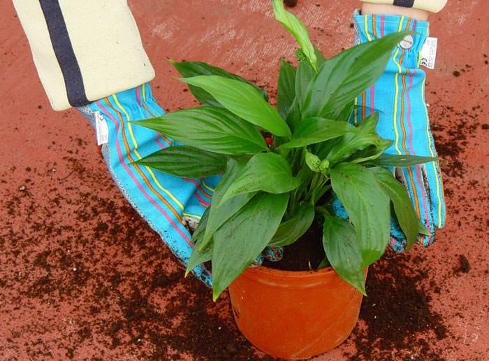 Plantas ornamentales de interior
