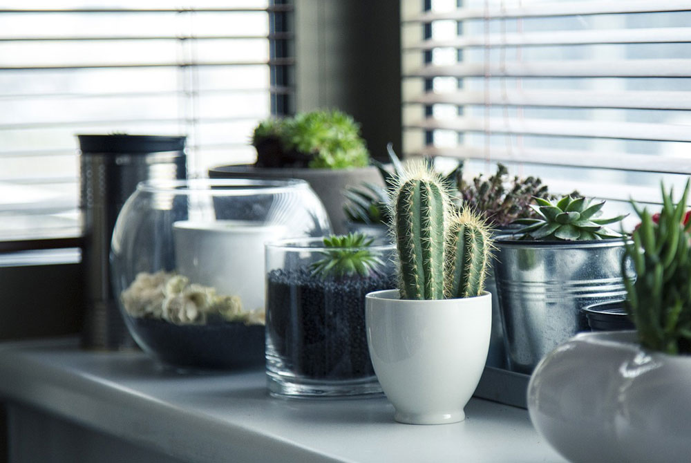 Plantas para apartamentos pequeños | Floresyplantas.net