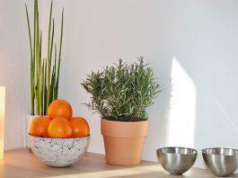 Plantas para cocinas modernas
