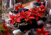 Poinsettias para decorar sobremesas