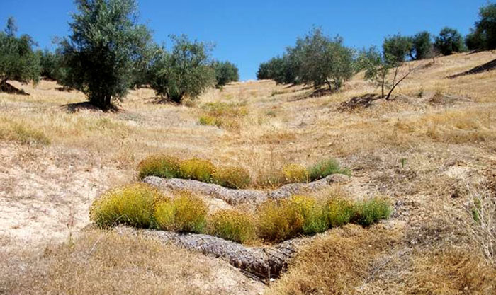 Prevención de la eutrofización por nitrógeno agrícola