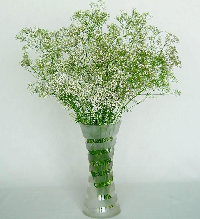 ramo de gypsophila paniculata1