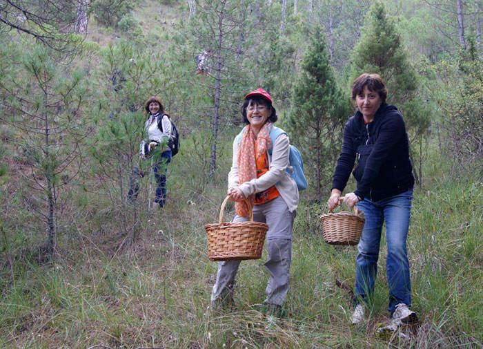 Recolección de rebollones por el bosque