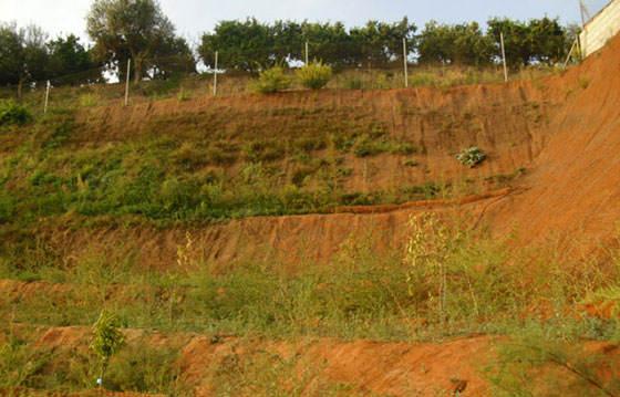Restauración paisajística de taludes