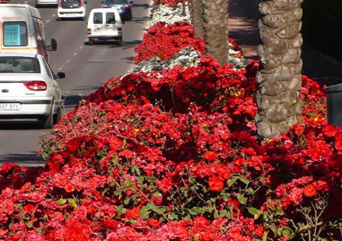 rosales paisajisticos