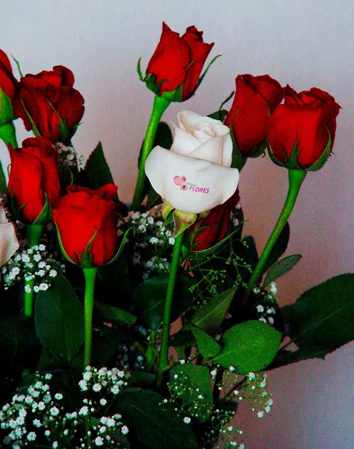 Rosas rojas blancas