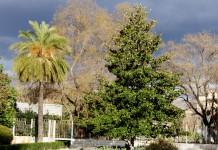 Salón del árbol