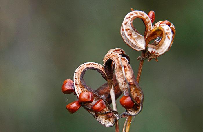 Semillas de plantas silvestres