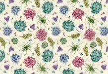 Plantas suculentas ilustradas por Enisaurus