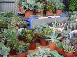 Sustratos para cactus