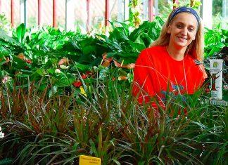 Sustrato para plantas de interior