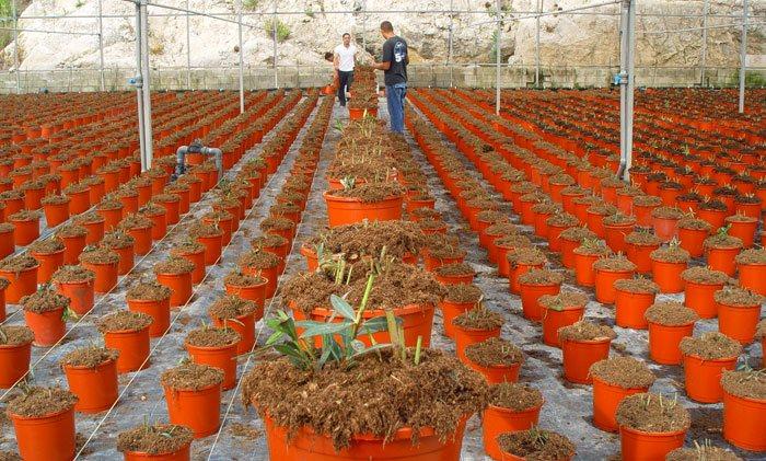 Sustrato para plantas ornamentales mediterráneas