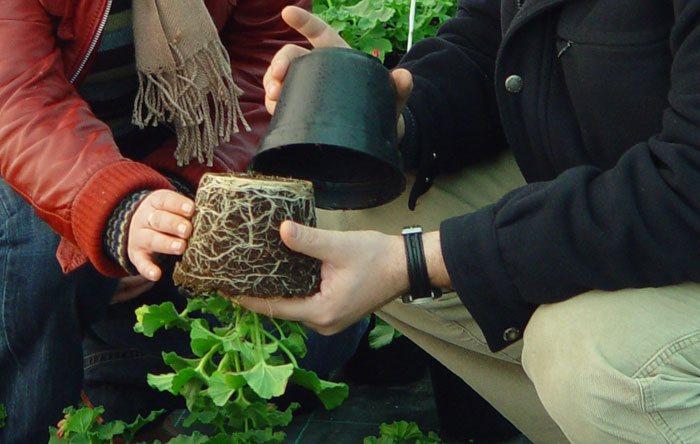 Sustratos para plantas en maceta