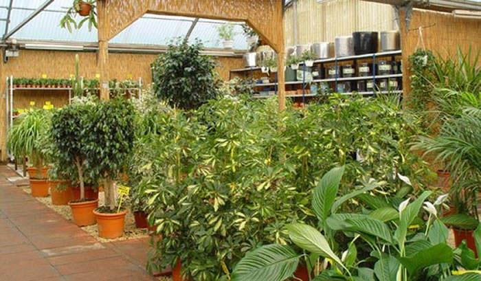 Plantas para apartamentos