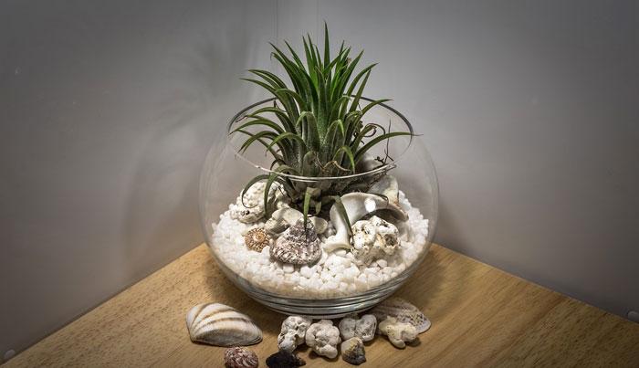 Plantas para apartamentos pequeños