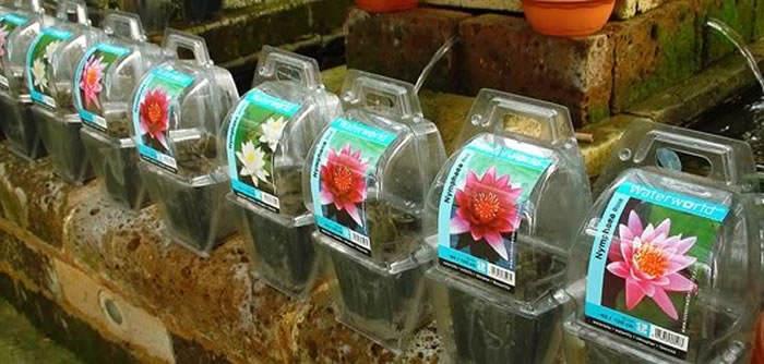 Tipos de plantas acuaticas