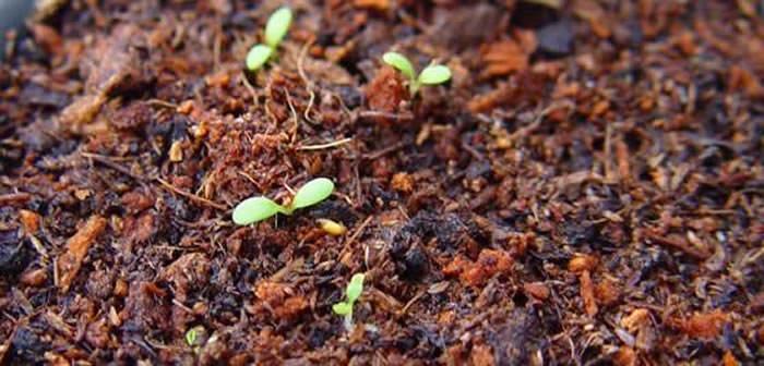 tratamiento de semillas