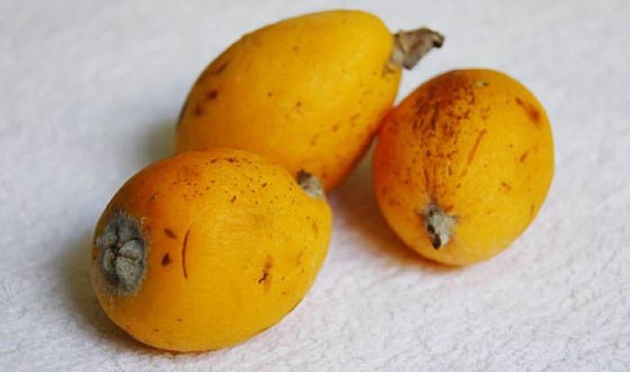 variedades de nísperos