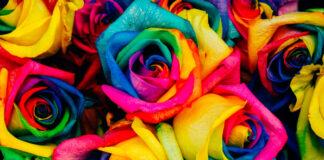 Cómo crear una nueva variedad de rosa