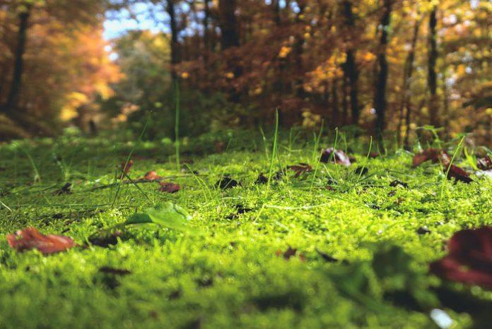 La vida del suelo