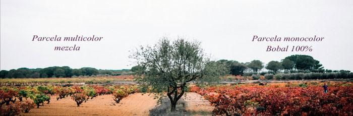 Vino de uvas en peligro de extinción