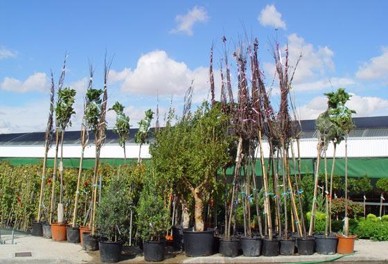 Viveros de plantas en madrid ver gratis for Viveros de plantas en vigo